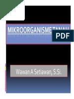 MIKROORGANISME-TANAH1