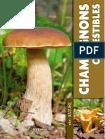 Champignons Comestibles - Artemis