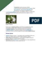 Plantas Pectorales y Antitusivas, Tonicas y Digestivas, Laxantes y Mas