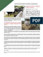 Cambios en ADN de Animales Domésticos Afectaría La Agricultura