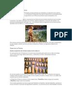 Concepto de Prehistoria