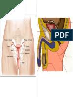 organos.pdf.docx