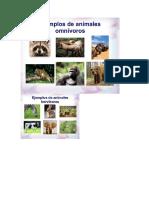 Clasificacion de Animales 2 Basico