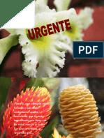 1aaaaaaaaaaa Urgente
