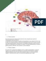 Adicciones.Psicofisiología