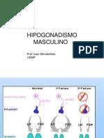 7. Hipogonadismo Masculino