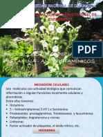 Clase.diapo.histamina Antihistaminicos 18
