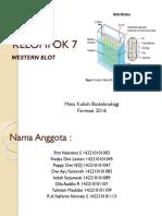 7. Western Blot