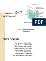 7. Western Blot.pptx