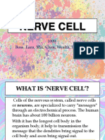 nerve cell 2
