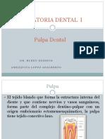 Operatoria Dental Exposicion