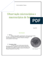 Observação microscópica e macroscópica de fungos.docx