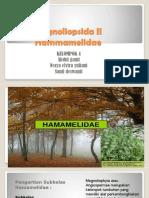 Magnoliopsida II Hammamelidae Ppt