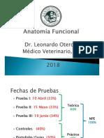 anatomia funcional