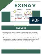 ANEXINA V