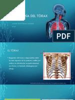 Anatomia y Fisiologia Pulmonar