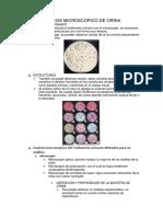 Analisis Microscopico de Orina