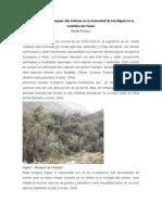 Restauración de Bosques Montanos en La Cordillera Del Tunari