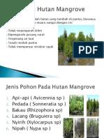 ekosistemhutanmangrove-120311015651-phpapp02