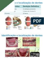 Anatomia Dentária Resumo fichas