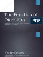 block 2 - function of digestion  u