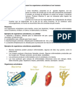 Beneficios y perjuicios que causan los organismos unicelulares al ser humano.docx