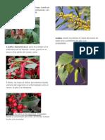 Diccionario Botanico