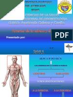 arteriasdecuelloycabezapoint-110413133113-phpapp01