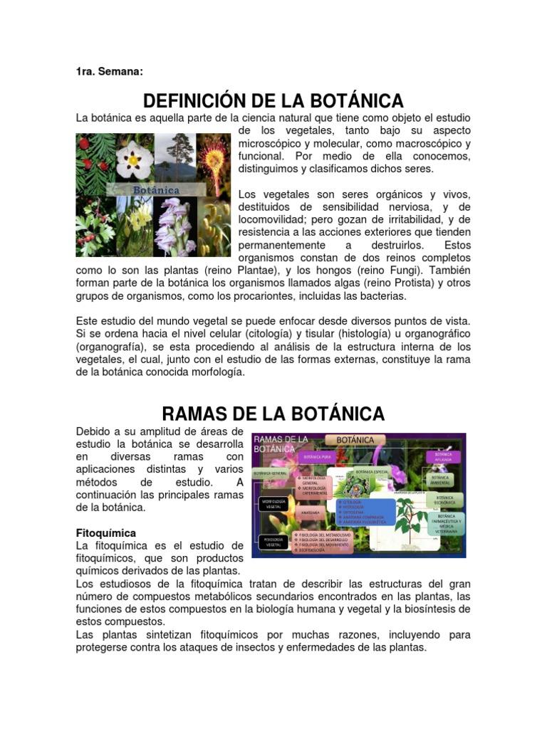 Bonito Definición Anatomía Microscópica Motivo - Anatomía de Las ...