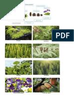 Imagenes Donimio Plantae
