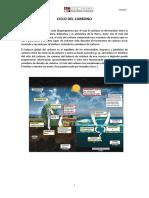 Ciclos Carbon y Nitrogeno