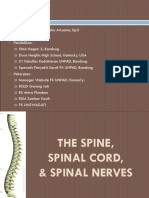 Spinal Cord, Spinal Nerve