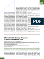 Differential DNA Damage Response in Stem and Progenitor Cells