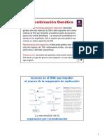 Recombinación-homóloga.pdf