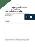 Hormona Adrenocorticotropa Definición, Funciones y Enfermedades Asociadas