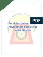 Pudricion de La Raices de Citricos Phytophtera Parasitica