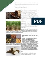 Qué Se Cultiva en El Salvador