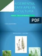 Seminar Flora Acvatica -Cu Denumiri