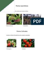 plantas_