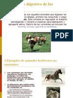 1el Aparato Digestivo de Los Rumiantes 1208718337519648 8