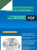Funciones Nerviosas Superiores - Fisio - Dra. Villacorta.ppt