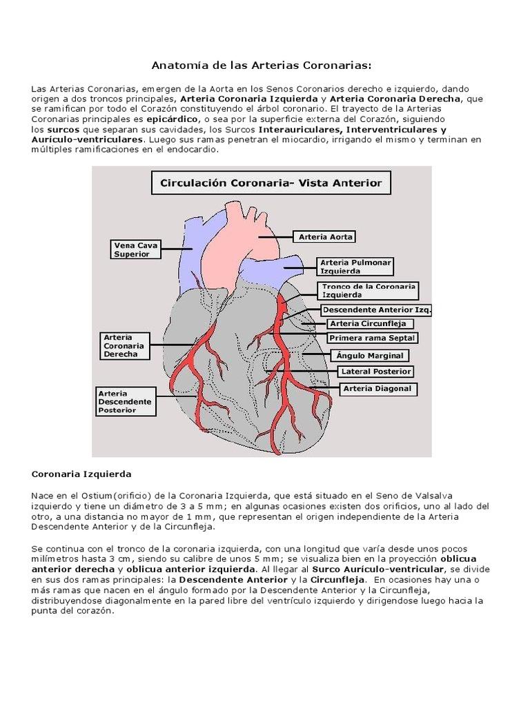 Lujoso Rompecabezas De Palabras Cruzadas Respuestas Anatomía ...