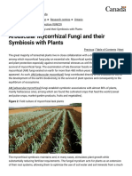 Arbuscular Mycorrhizal Fungi and Their Symbiosis With Plants - Agriculture and Agri-Food Canada (AAFC)