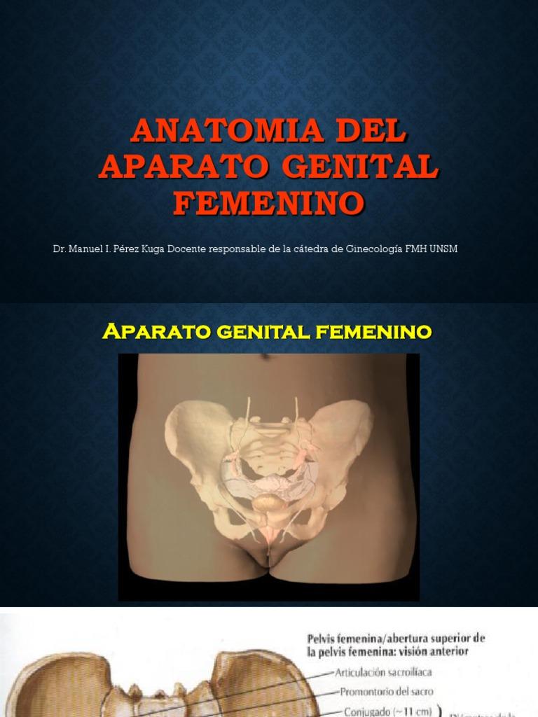 Dorable Anatomía Del Sistema Reproductor Femenino Canguro ...