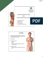 PDF CáTedra 2 AnatomÃ-A Func. Sist. Tegumentario y Fascias Anato. Desc. to UST 2017.