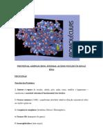 Proteínas, Aminoácidos, Enzimas,Ácidos Nucléicos