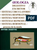 Clase 05 Fisiologia 1