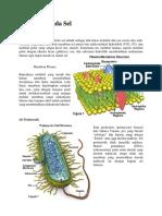 Biologi - Transport Pada Sel