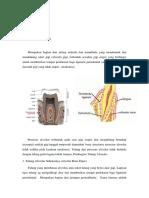 Struktur tulang alveolar