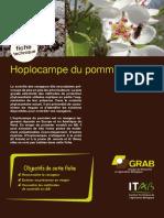 Fiche Technique _ Hoplocampe Du Pommier en AB